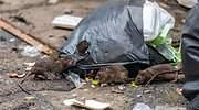 ratas-en-la-ciudada-basura-istock.jpg