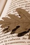 libro-otono.jpg
