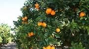 Naranja333.jpg