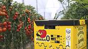 Agrobio-Colmena-abejorros-en-cultivo-tomate.jpg