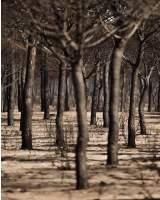 El fuego de Doñana ha quemado 8.486 hectáreas, lo equivalente a 160 veces la Ciudad del Vaticano