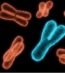 cromosomas-thinkstock.jpg