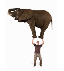 elefante-emprendedor-thinkstock.jpg