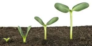 Emprendedores: cómo encontrar al inversor ideal