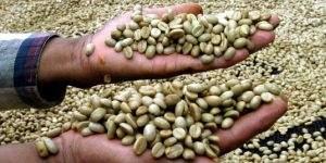 ¿Cree que el café ha subido? Puede hacerlo un 16% más