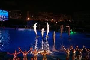 Ritmo y delfines para concienciar en las mágicas Noches del Oceanogràfic