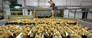 Patatas Gómez invierte un millón de euros para aumentar su capacidad de producción