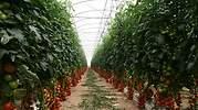 semillas-fito.jpg
