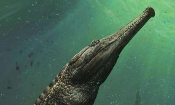 cocodrilo-grande-historia-fosil-ep.jpg