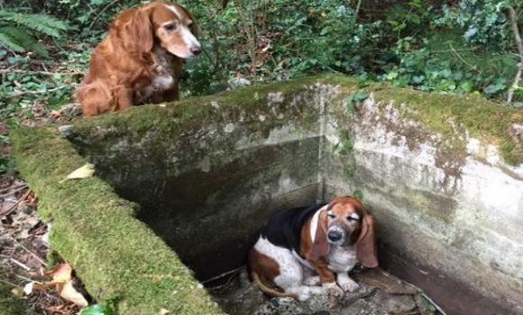 La entra able historia de un perro que acompa durante for Estanque para perros