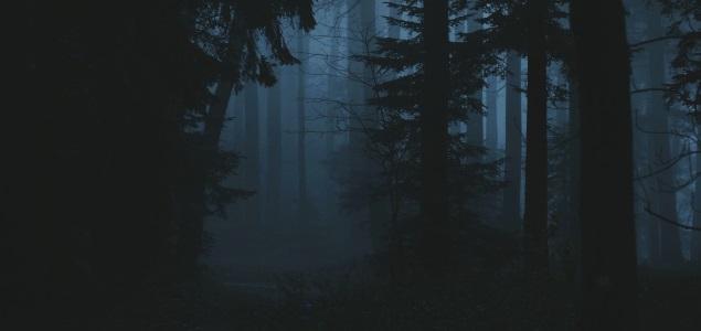 bosque-noche-getty-635x300.jpg