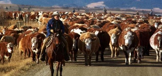 ganadería.jpg