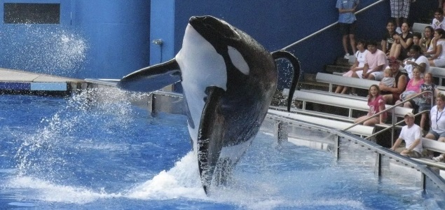 SeaWorld-Orca-Reuters-635.jpg