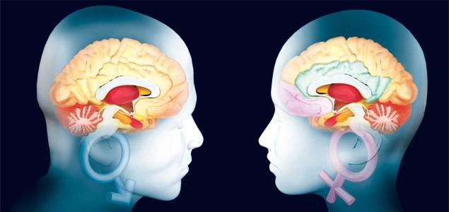 Cerebro-Hombre-Mujer-Getty-635-300.jpg