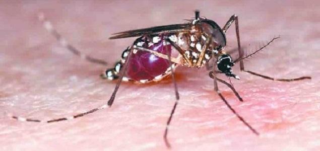 zika11.jpg