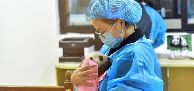 oso-panda-getty.jpg