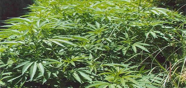 marihuanainterior.jpg