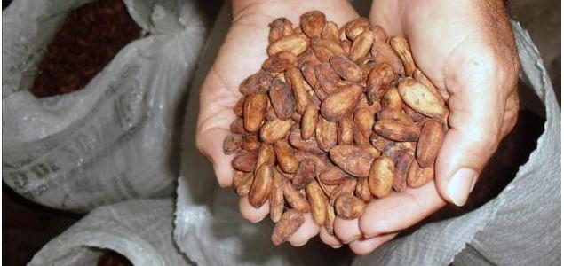 cacao-amazonia-635-efe.jpg