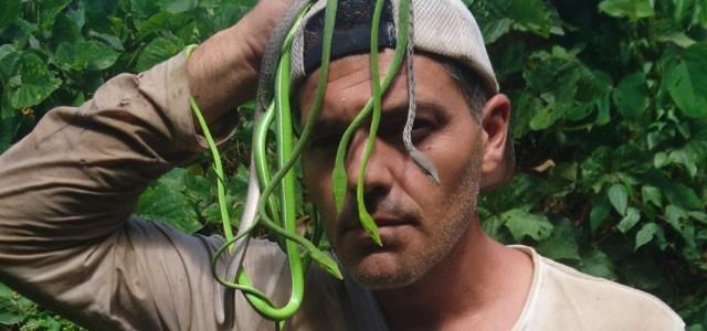 frank-cuesta-serpientes.jpg