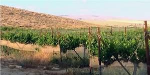 Cómo producir vino desde el desierto: Carmey Avdat, un viñedo pionero en Israel