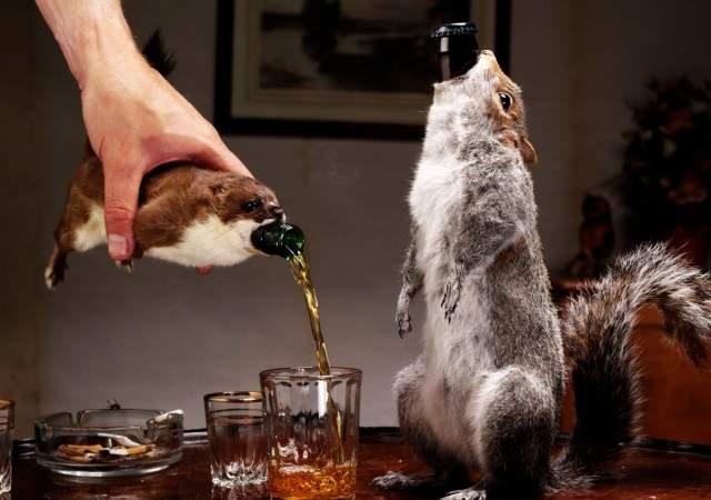 cerveza-ardilla-1.jpg