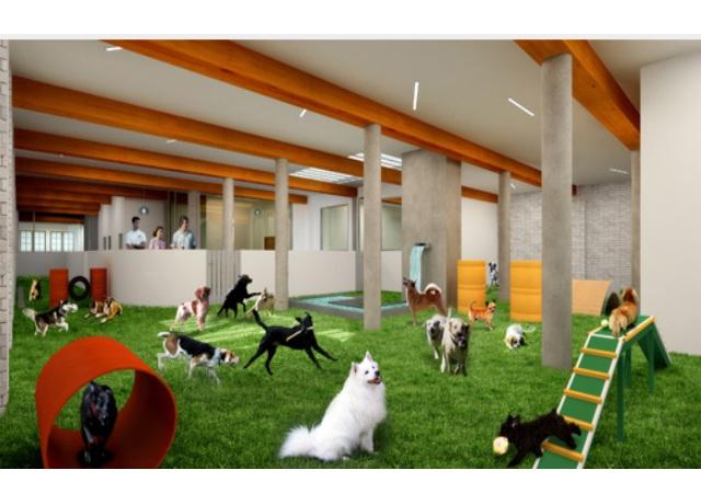 Hoteles de lujo para perros for Hoteles de lujo baratos madrid