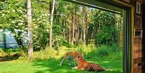 Una noche en familia entre tigres de bengala