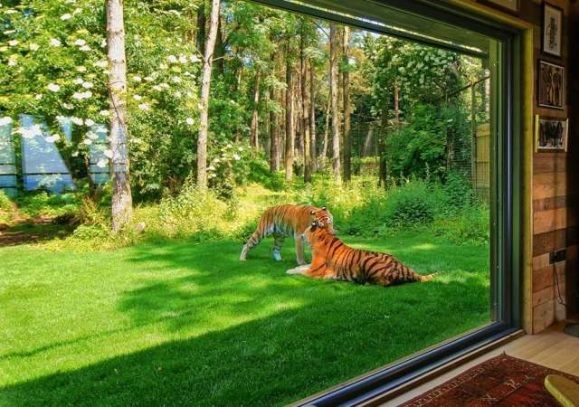 tiger-lodge-1.jpg