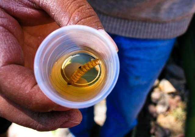 Mezcal, el tequila para expertos