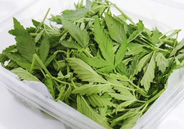 El cannabis: nuevo superalimento
