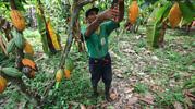 agricultor_peru_empleo770.png