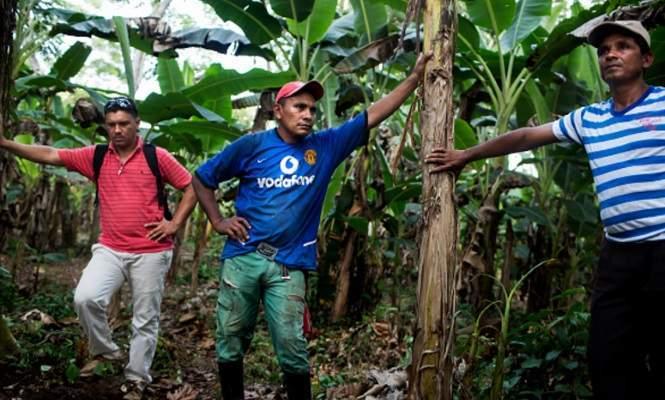 plantacion-coca-colombia-agricultores.jpg