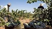 Valdepeñas despidió a los inspectores que certificaban la calidad del vino
