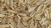 Seat planea sustituir plásticos por cáscaras de arroz en las piezas de su León
