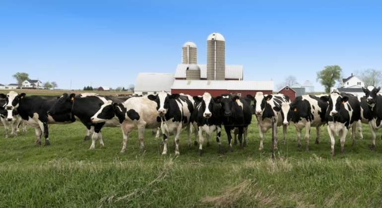 vacas-ganaderia-dreams.jpg