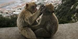 Buscan elevar a estándares internacionales la regulación de parques zoológicos