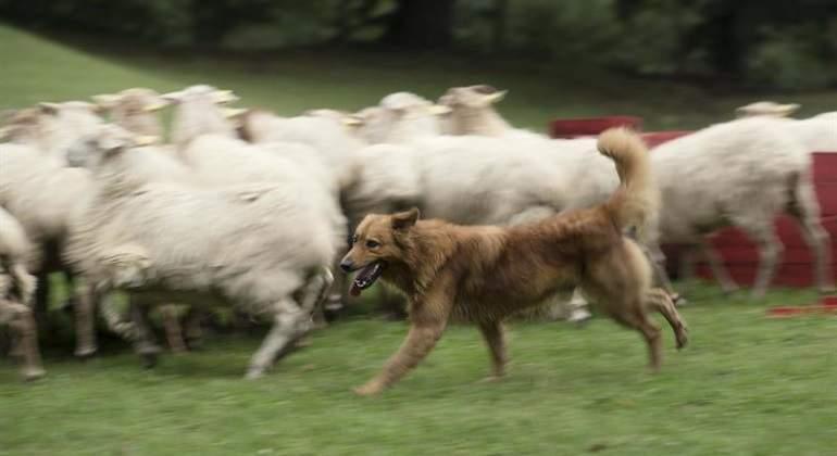 perro-ciego.jpg