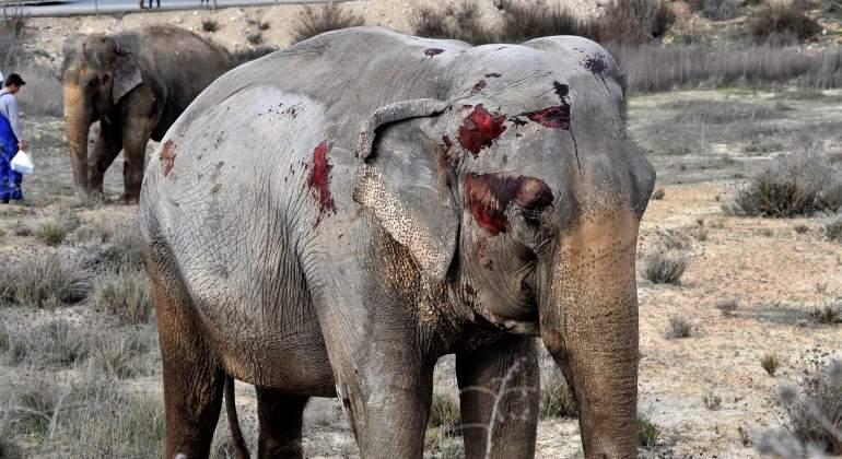 elefantes-pozocanada-accidente-efe.jpg