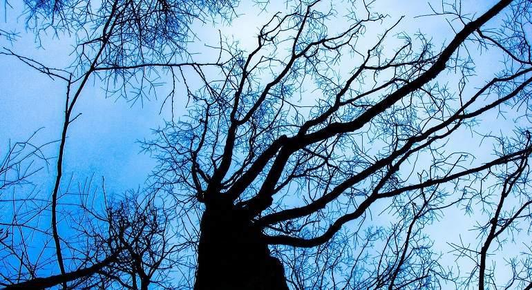 tree-200221_1920.jpg