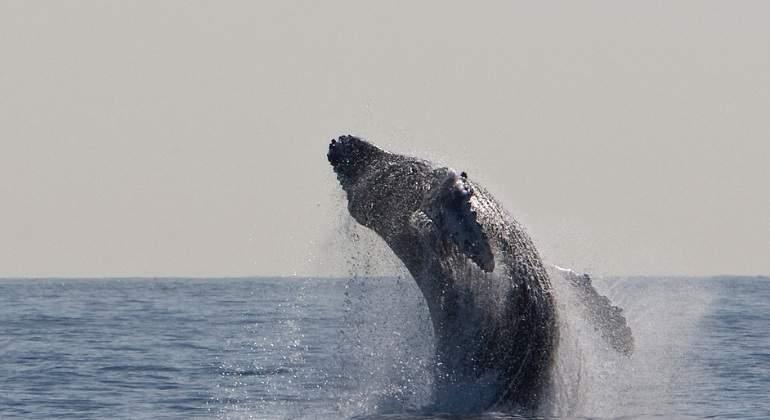 ballena-grande-770x420-pixabay.jpg
