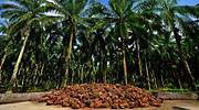 aceitedepalma-plantacion-malasia-dreamstime.jpg