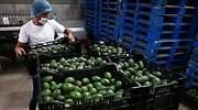 exportaciones-agroalimentarias-coronavirus-mexico.jpg