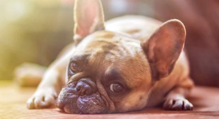 perro-cachorro-pixabay.jpg
