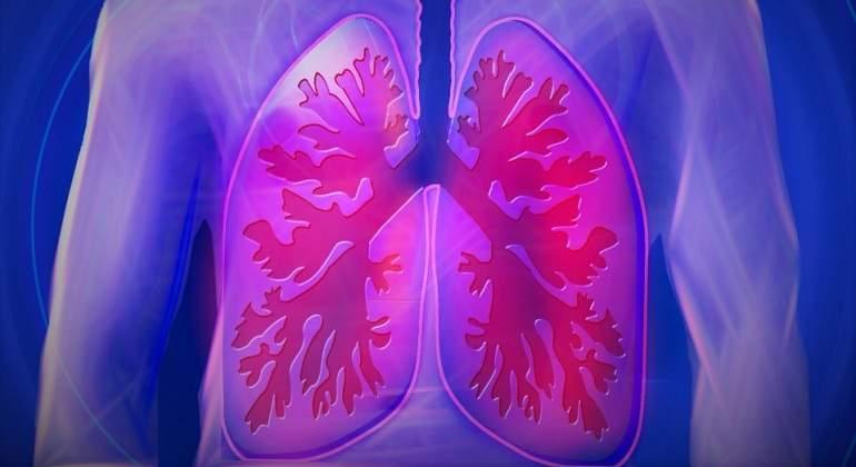 Los pulmones fabrican sangre además de respirar