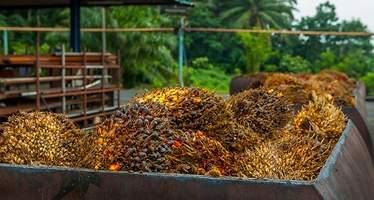 El aceite de palma inunda nuestras vidas: su consumo se multiplica por 11 desde el 2000