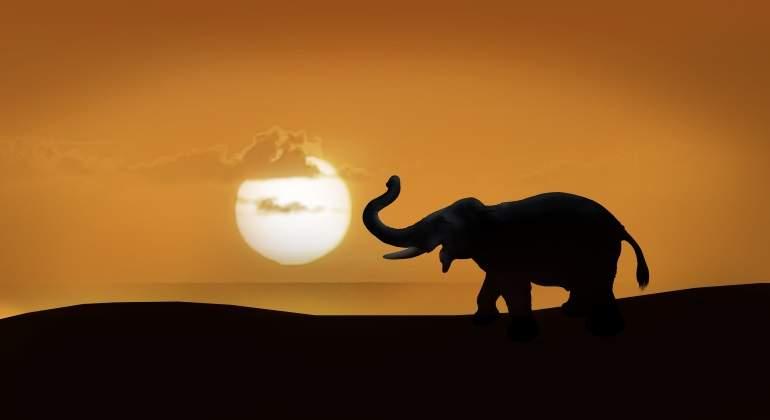 elefante-silueta-dreamstime.jpg