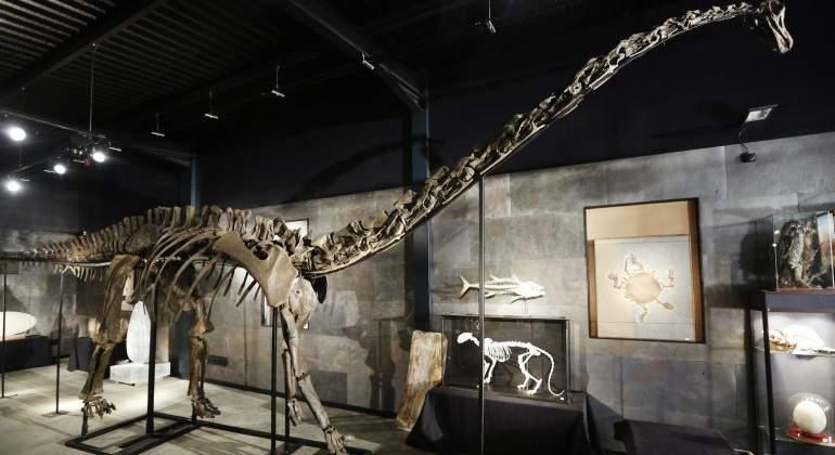 dinosaurio-diplodocus-reuters.jpg