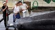japon-ballena-caza.jpg