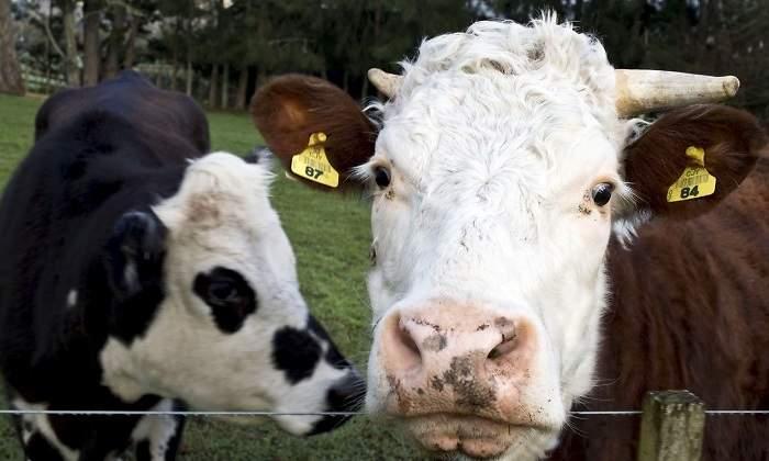 Leche que no sea de vaca para bebes