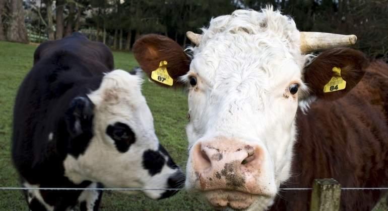 vaca-leche-granja.jpg